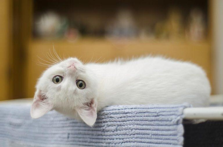 Uzyskaj przydatne wskazówki dotyczące kotów, które są łatwe do zrozumienia